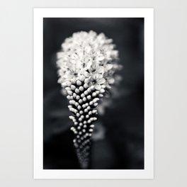 B&W Floral Art Print