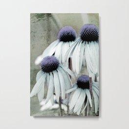 Discolored echinacea flowers Metal Print