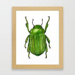 Chysina gloriosa -Glorious Scarab  Beetle Framed Art Print