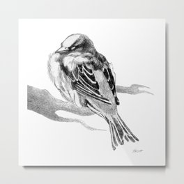 Sparrow Bird Snoozing Metal Print