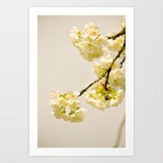 I love cherry blossoms Art Print