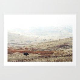 Lone Bison on National Bison Range in Montana Art Print