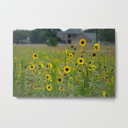 Sunflowers in the Suburbs Metal Print