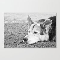 husky Canvas Prints featuring husky by MrBdigital