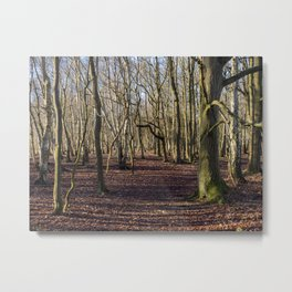 Bare Winter Woods Metal Print