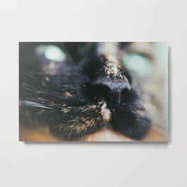 Bokeh Eye Surprise. Tortie Cat Photograph Metal Print