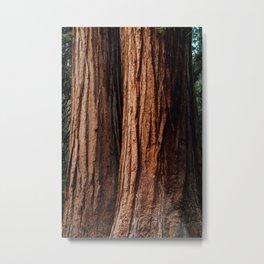 Sequoia Texture Metal Print