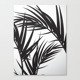 Black and White Palm Leaves Canvas Print