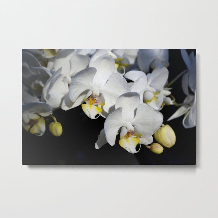 Orchids Metal Print