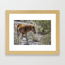 Salt River Wild Foal Framed Art Print