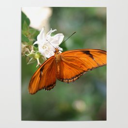 Julia Butterly Poster
