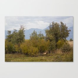 Bull Elk with Fall Colors Canvas Print