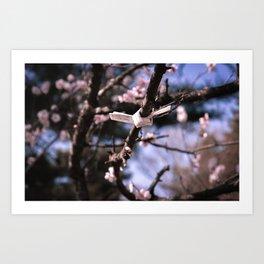 Wildflower Series - Cherry Blossom Art Print