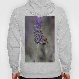Bee on Lavender Hoody