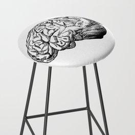 Brain Anatomy Bar Stool