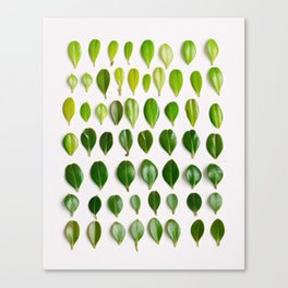 ombre leaves Canvas Print