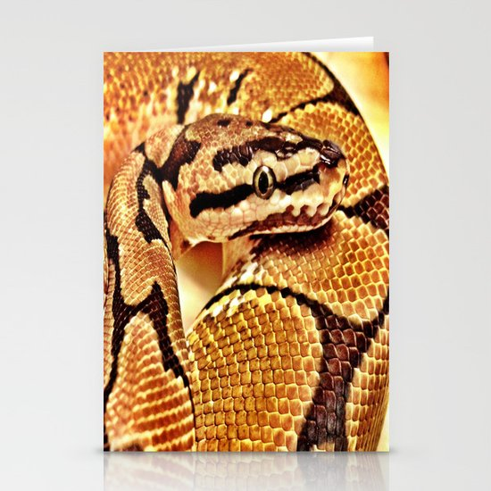 Python wearing Gold Stationery Cards
