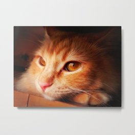 Those Amber Eyes Metal Print