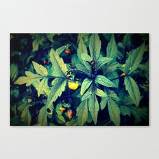 Flower Bud among leaves  Canvas Print