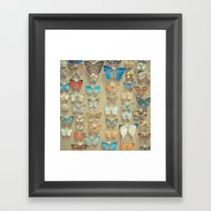 The Butterfly Collection II Framed Art Print