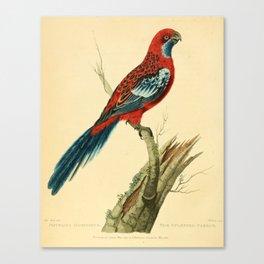 """The Splendid Parrot"" by Sarah Stone, 1790s Canvas Print"