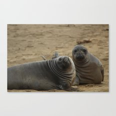 two elephant seal pups Canvas Print