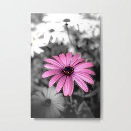 Pink Daisy Metal Print