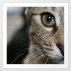 Eye of a Tiger... Art Print