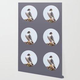 Majestic: Peregrine Falcon Wallpaper