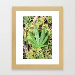 Sativa & Succulents Framed Art Print