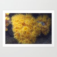 coral Art Prints featuring Coral by Deborah Janke