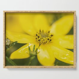 Coreopsis 3 Serving Tray