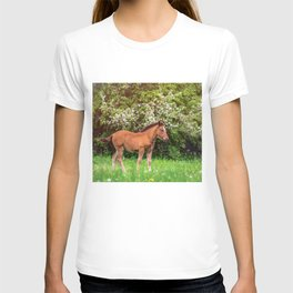Nice little foal T-shirt