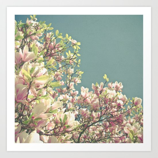 Magnolia in Bloom Art Print