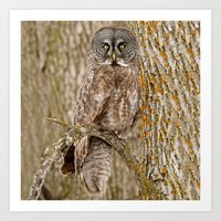 camouflage Art Prints featuring Camouflage by owlgoddessphotography