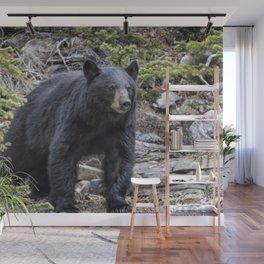 American Black Bear, No. 1 Wall Mural