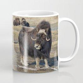 Arctic Muskox Coffee Mug