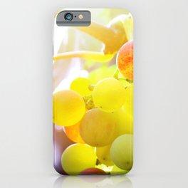 Fresh unripe grapes on vine close-up under sunlight in summer iPhone Case