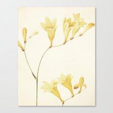 IV. Vintage Flowers Botanical Print by Pierre-Joseph Redouté - Sisyrinchium Collinum Canvas Print