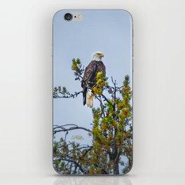 October Eagle iPhone Skin