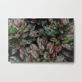 Pink Spray Metal Print