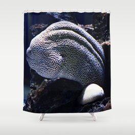 Honeycomb Moray Eel Shower Curtain