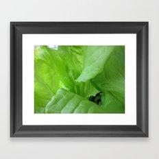 Summer Salad Green Framed Art Print