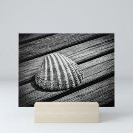A single shell Mini Art Print