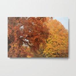 Beautiful Trees in Hyde Park, London, UK Metal Print