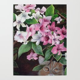 Hiding Kitty Poster