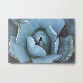 Succulent - Cactus Metal Print