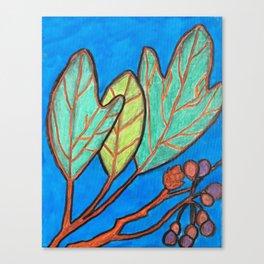 Sassafras Canvas Print