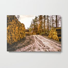 Poltery Site (Wood Storage Area) After Storm Victoria Möhne Forest 5 bright Metal Print
