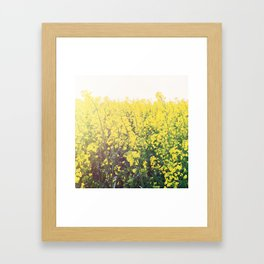 Yellow Raps Field Framed Art Print
